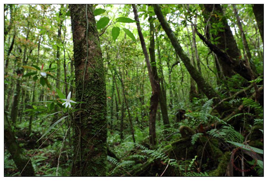 Forêt des Bas