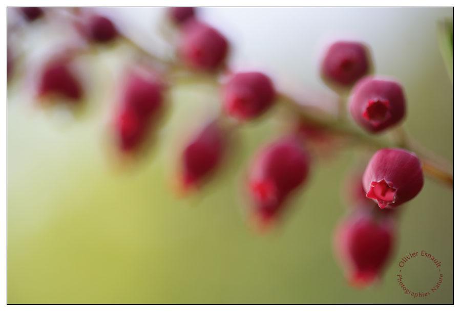 Fleurs du Petit Bois de Rempart