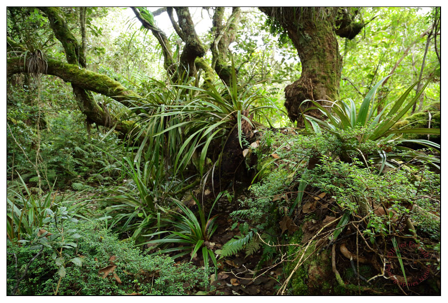 Forêt des Hauts