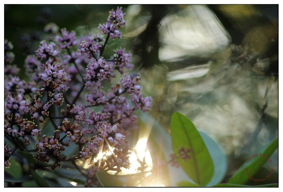 Fleur de Bois Maigre